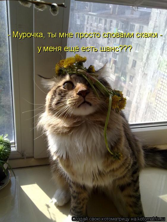 http://kotomatrix.ru/images/lolz/2014/12/16/kotomatritsa_DL.jpg