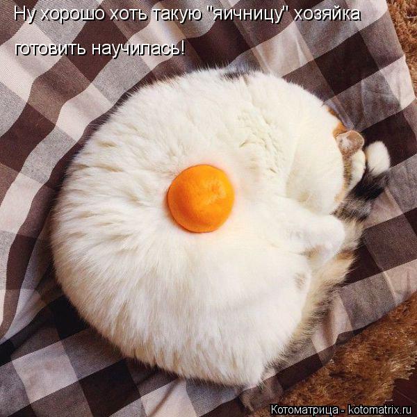 """Котоматрица: Ну хорошо хоть такую """"яичницу"""" хозяйка готовить научилась!"""