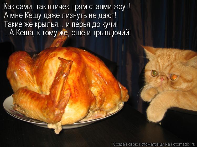 Котоматрица: Как сами, так птичек прям стаями жрут! А мне Кешу даже лизнуть не дают! Такие же крылья... и перья до кучи! ...А Кеша, к тому же, еще и трындючий!