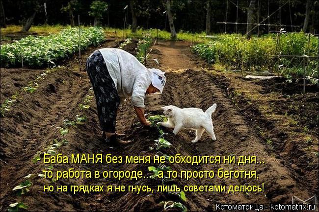 Котоматрица: - Баба МАНЯ без меня не обходится ни дня... то работа в огороде...  а то просто беготня, но на грядках я не гнусь, лишь советами делюсь!