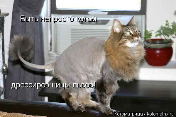 Котоматрица: Быть непросто котом дрессировщицы львов!
