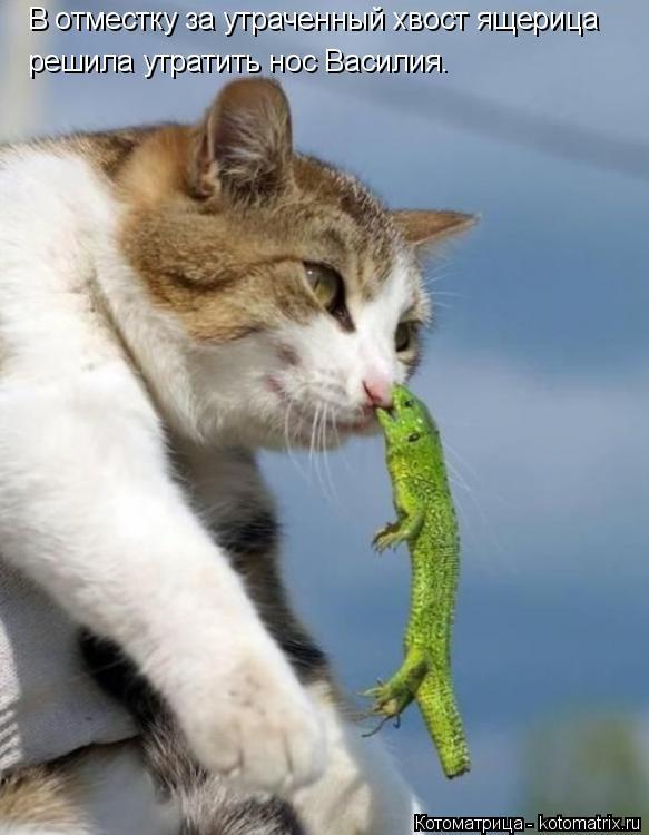 Котоматрица: В отместку за утраченный хвост ящерица решила утратить нос Василия.