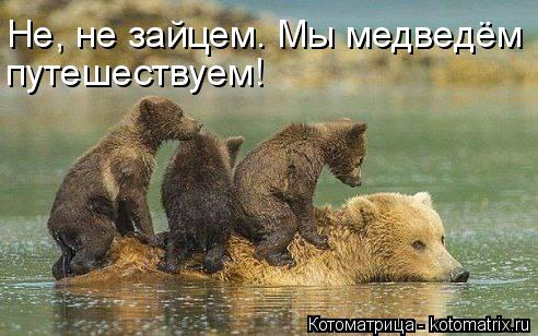 Котоматрица: Не, не зайцем. Мы медведём  путешествуем!