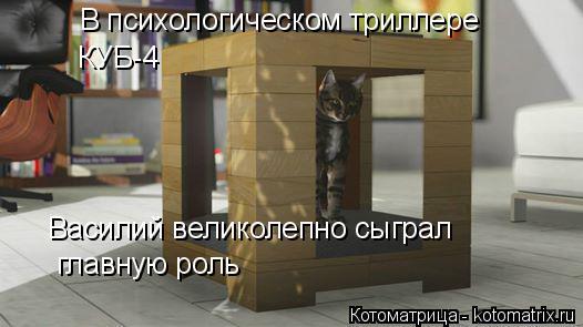Котоматрица: В психологическом триллере  КУБ-4 Василий великолепно сыграл главную роль