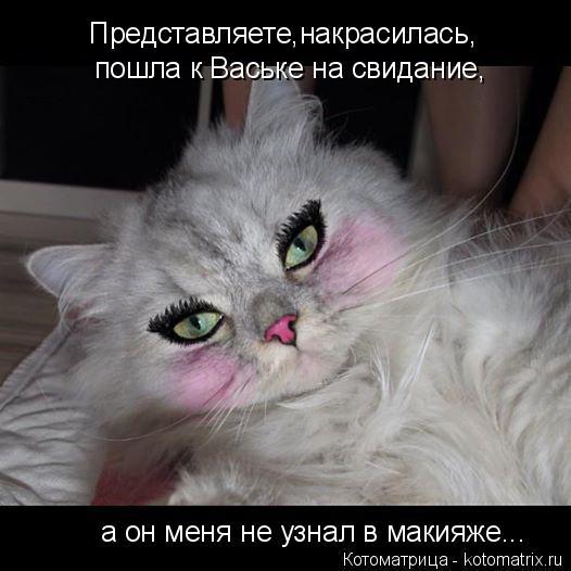 Котоматрица: Представляете,накрасилась, пошла к Ваське на свидание, а он меня не узнал в макияже...