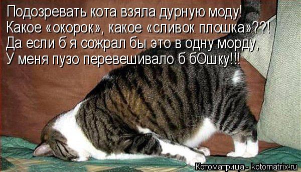 Котоматрица: Подозревать кота взяла дурную моду! Какое «окорок», какое «сливок плошка»??! Да если б я сожрал бы это в одну морду, У меня пузо перевешивало