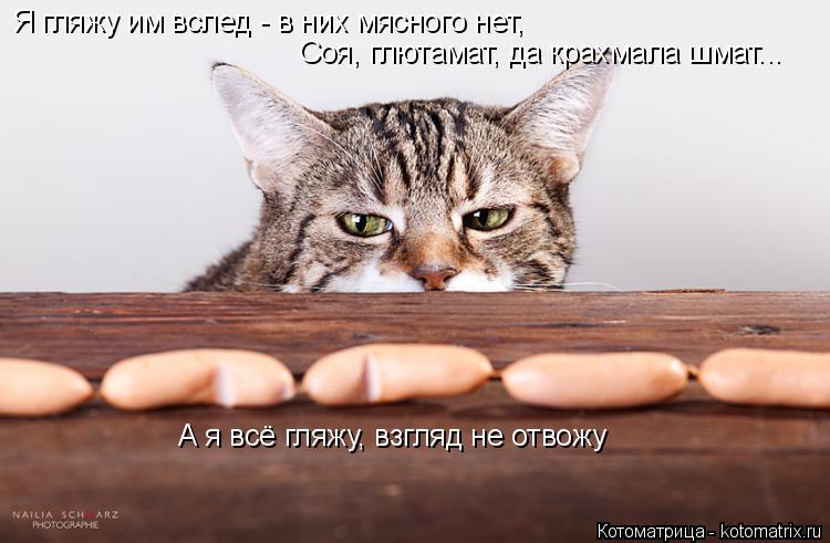 Котоматрица: Я гляжу им вслед - в них мясного нет, Соя, глютамат, да крахмала шмат... А я всё гляжу, взгляд не отвожу