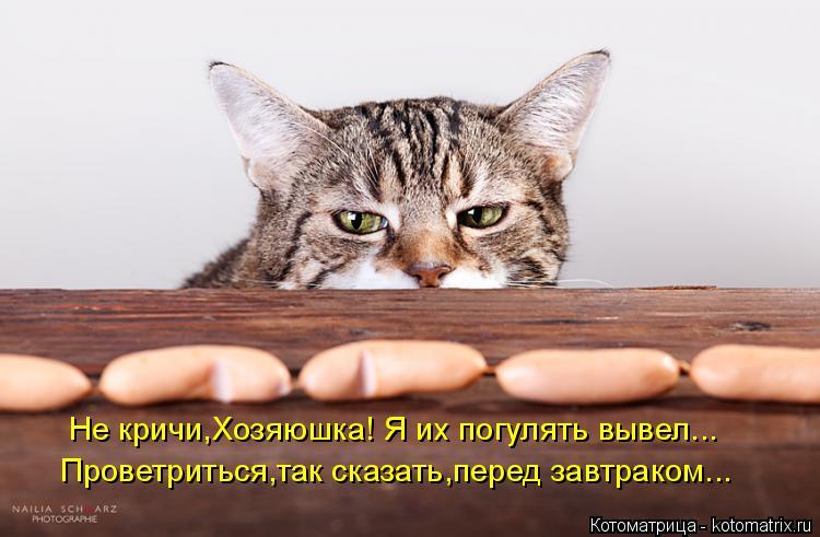 Котоматрица: Не кричи,Хозяюшка! Я их погулять вывел... Проветриться,так сказать,перед завтраком...