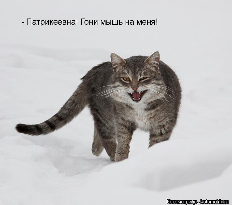 Котоматрица: - Патрикеевна! Гони мышь на меня!