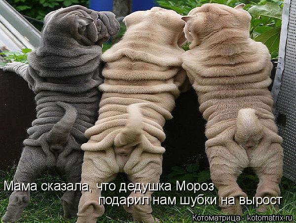 Котоматрица: Мама сказала, что дедушка Мороз подарил нам шубки на вырост