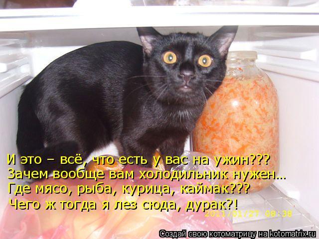 Котоматрица: И это – всё, что есть у вас на ужин??? Зачем вообще вам холодильник нужен… Где мясо, рыба, курица, каймак??? Чего ж тогда я лез сюда, дурак?!