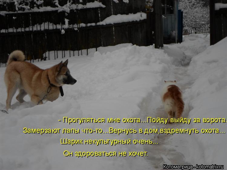 Котоматрица: - Прогуляться мне охота...Пойду выйду за ворота... Замерзают лапы что-то...Вернусь в дом,вздремнуть охота... Шарик некультурный очень... Он здоро