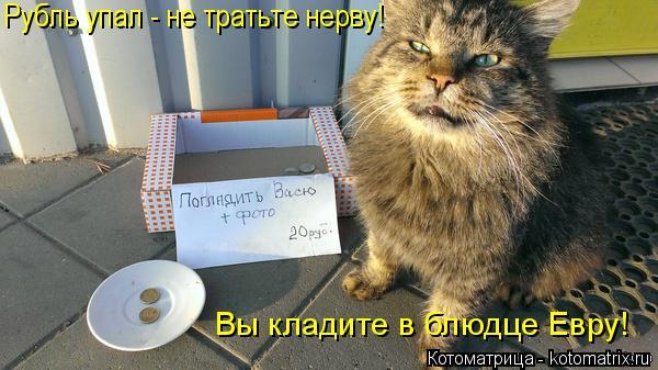 Котоматрица: Рубль упал - не тратьте нерву! Вы кладите в блюдце Евру!