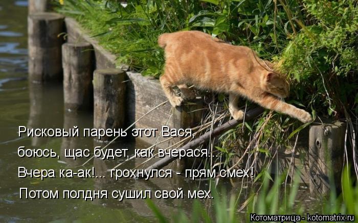Котоматрица: Рисковый парень этот Вася, боюсь, щас будет, как вчерася... Вчера ка-ак!... грохнулся - прям смех! Потом полдня сушил свой мех.