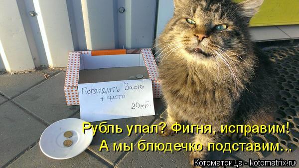 Котоматрица: А мы блюдечко подставим... Рубль упал? Фигня, исправим!