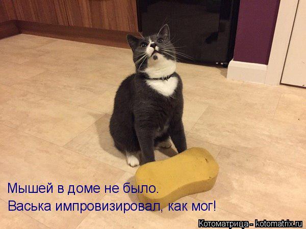 Котоматрица: Мышей в доме не было. Васька импровизировал, как мог!