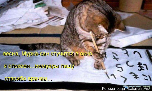 Котоматрица: я спокоен...мемуары пишу весна, Мурка-сан стучится в окно спасибо врачам...