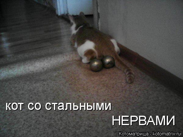 Котоматрица: кот со стальными  НЕРВАМИ