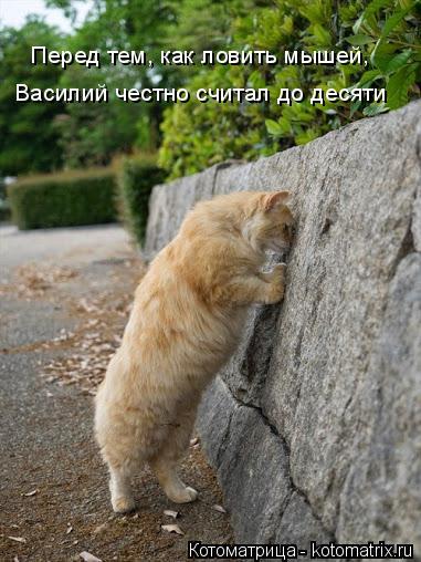 Котоматрица: Перед тем, как ловить мышей, Василий честно считал до десяти