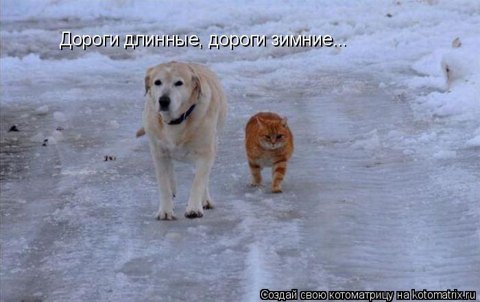 Котоматрица: Дороги длинные, дороги зимние...