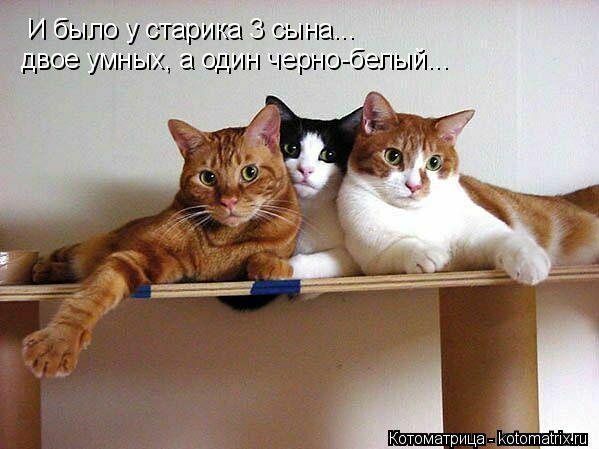 Котоматрица: И было у старика 3 сына... двое умных, а один черно-белый...