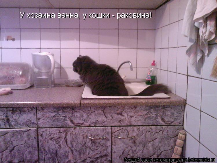Котоматрица: У хозаина ванна, у кошки - раковина!