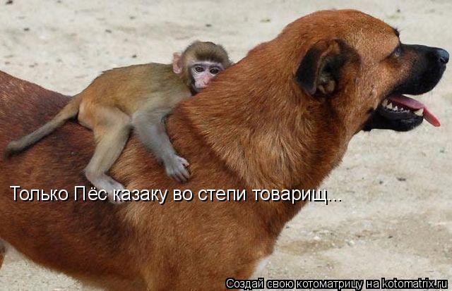 Котоматрица: Только Пёс казаку во степи товарищ...
