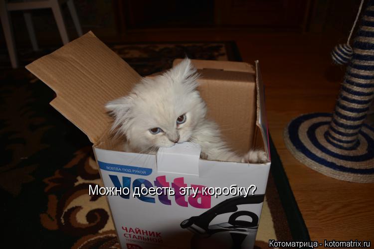Котоматрица: Можно доесть эту коробку?