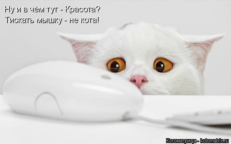 Котоматрица: Ну и в чём тут - Красота? Тискать мышку - не кота!