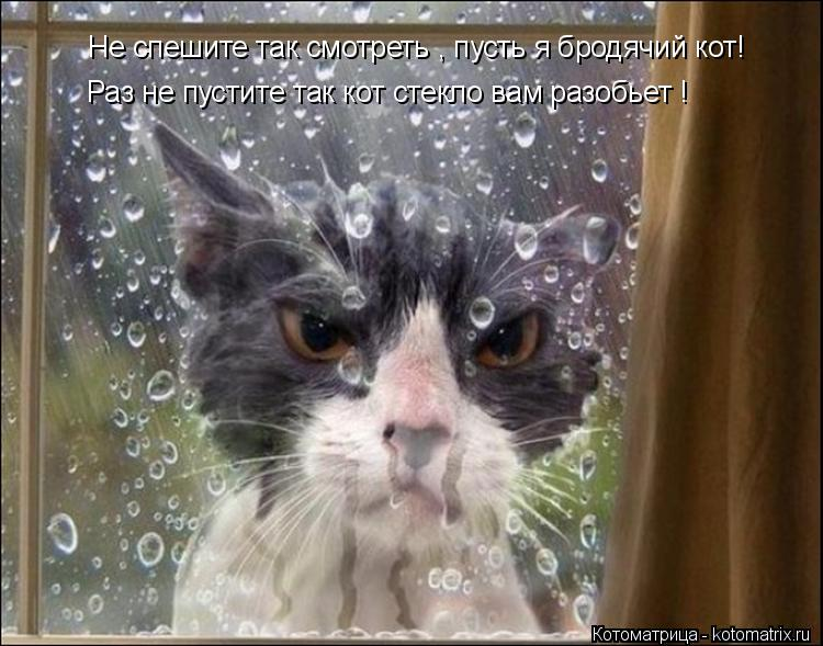 Котоматрица: Не спешите так смотреть , пусть я бродячий кот! Раз не пустите так кот стекло вам разобьет !