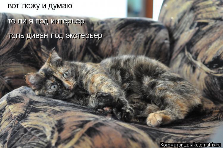 Котоматрица: вот лежу и думаю то ли я под интерьер толь диван под экстерьер
