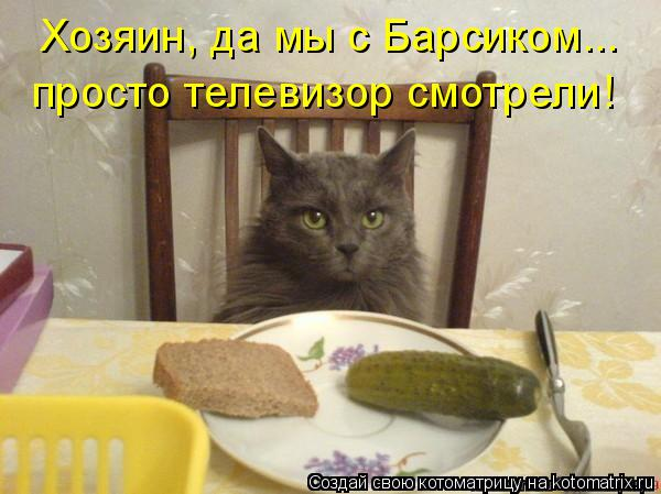 Котоматрица: Хозяин, да мы с Барсиком... просто телевизор смотрели!