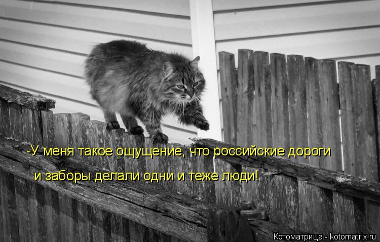 Котоматрица: -У меня такое ощущение, что российские дороги и заборы делали одни и теже люди!