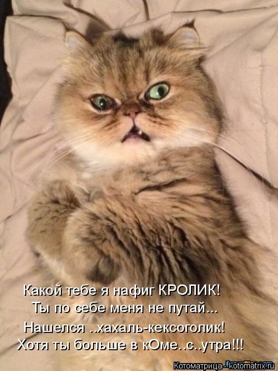 Котоматрица: Какой тебе я нафиг КРОЛИК! Ты по себе меня не путай... Хотя ты больше в кОме..с..утра!!! Нашелся ..хахаль-кексоголик!
