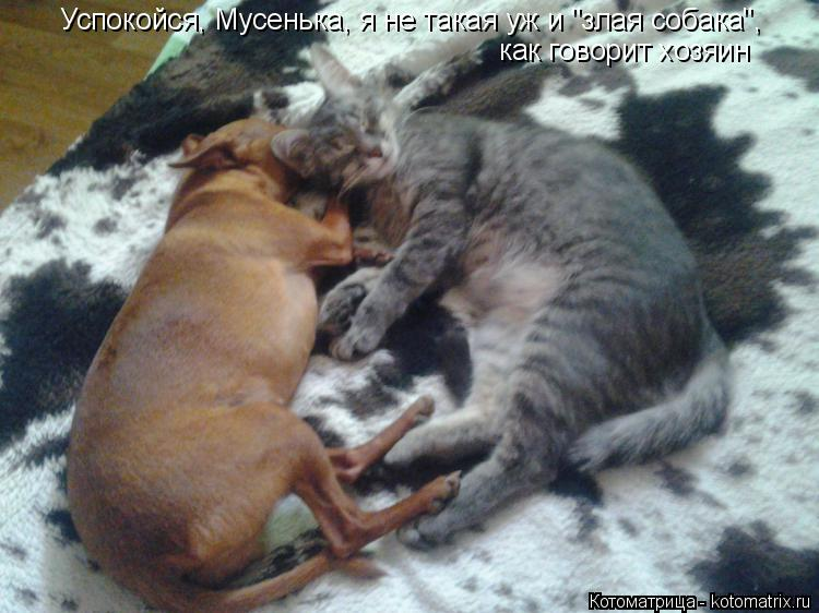 """Котоматрица: Успокойся, Мусенька, я не такая уж и """"злая собака"""", как говорит хозяин"""