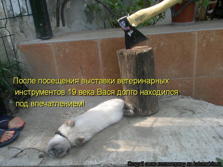 Котоматрица: После посещения выставки ветеринарных инструментов 19 века Вася долго находился под впечатлением!
