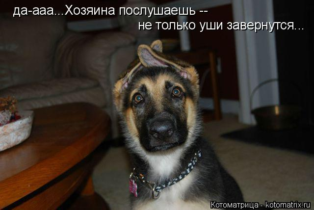 Котоматрица: да-ааа...Хозяина послушаешь --  не только уши завернутся...