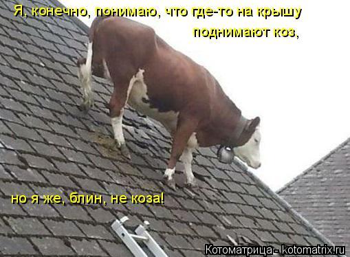 Котоматрица: Я, конечно, понимаю, что где-то на крышу  поднимают коз,  но я же, блин, не коза!
