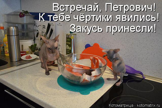Котоматрица: Встречай, Петрович!  К тебе чёртики явились! Закусь принесли!