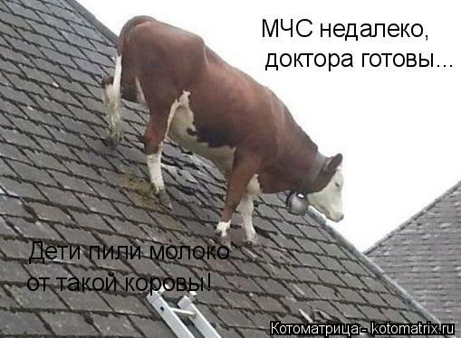 Котоматрица: МЧС недалеко, доктора готовы... Дети пили молоко от такой коровы!