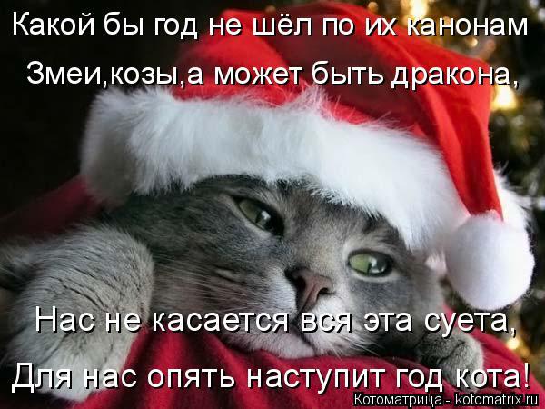 Котоматрица: Какой бы год не шёл по их канонам Змеи,козы,а может быть дракона, Нас не касается вся эта суета, Для нас опять наступит год кота!