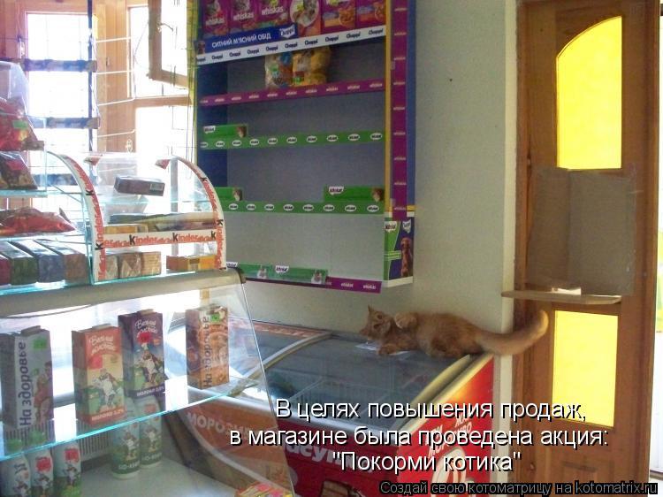 """Котоматрица: В целях повышения продаж, в магазине была проведена акция: """"Покорми котика"""""""