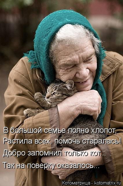 Котоматрица: В большой семье полно хлопот, Растила всех, помочь старалась! Добро запомнил только кот... Так на поверку оказалось...
