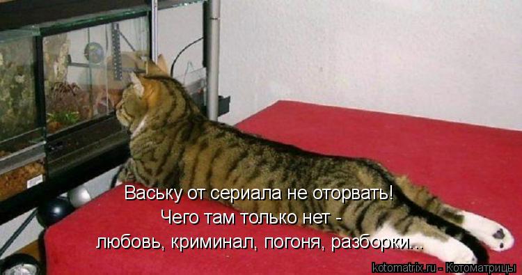 Котоматрица: Ваську от сериала не оторвать! Чего там только нет -  любовь, криминал, погоня, разборки...