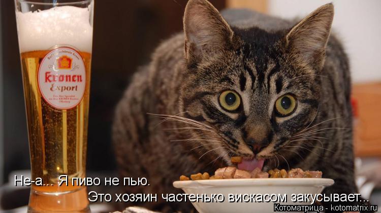 Котоматрица: Это хозяин частенько вискасом закусывает... Не-а... Я пиво не пью.