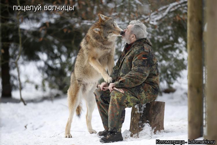 Котоматрица: поцелуй волчицы