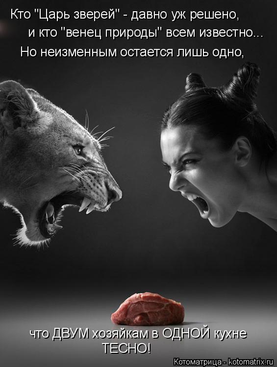 """Котоматрица: Кто """"Царь зверей"""" - давно уж решено,  и кто """"венец природы"""" всем известно... Но неизменным остается лишь одно, что ДВУМ хозяйкам в ОДНОЙ кухне ТЕ"""