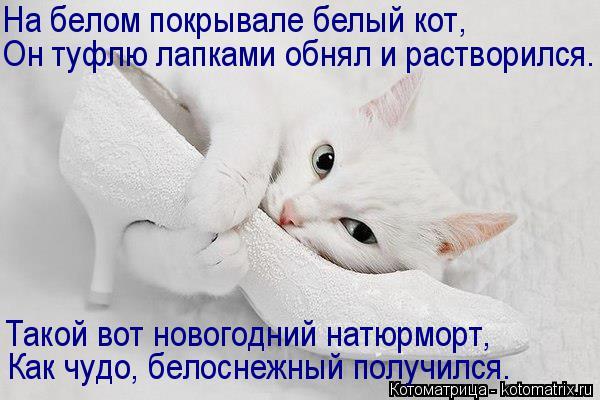 Котоматрица: На белом покрывале белый кот, Он туфлю лапками обнял и растворился. Такой вот новогодний натюрморт, Как чудо, белоснежный получился.