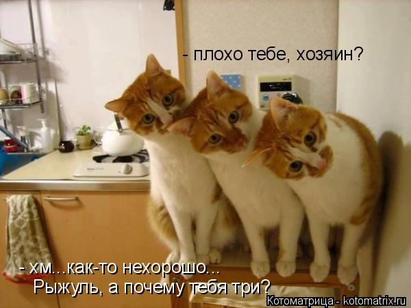 Котоматрица: - плохо тебе, хозяин?  - хм...как-то нехорошо... Рыжуль, а почему тебя три?