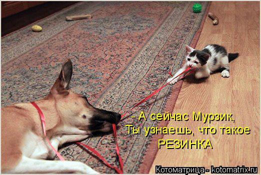 Котоматрица: - А сейчас Мурзик, Ты узнаешь, что такое  РЕЗИНКА